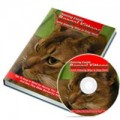 Raising Exotic Bengal Kittens MRR Ebook With Audio