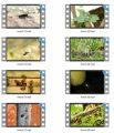 Insects Stock Videos - V2 MRR Video