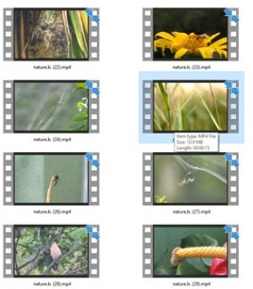 Nature Stock Videos Two – V2 MRR Video