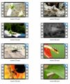 Insects Stock Videos Four - V2 MRR Video