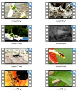 Insects Stock Videos Four – V2 MRR Video