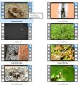 Insects Stock Videos Two - V2 MRR Video