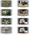 Animals Stock Videos Four V2 MRR Video