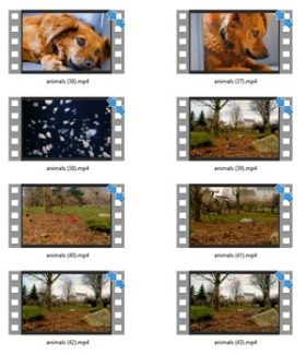Animals Stock Videos Three V2 MRR Video