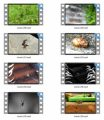 Insects Stock Videos Three - V2 MRR Video