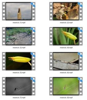 Insect Stock Videos One – V2 MRR Video