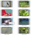 Nature Stock Videos Four - V2 MRR Video
