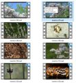 Insect Stock Videos Three - V2 MRR Video