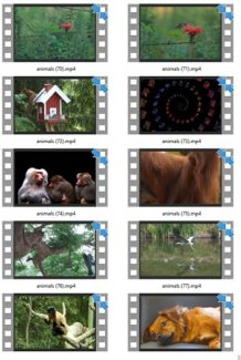 Animals Stock Videos Five V2 MRR Video