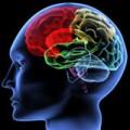 Brain Programming Audios Package Personal Use Audio