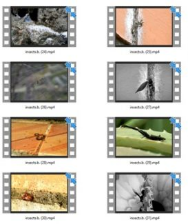 Insect Stock Videos Two – V2 MRR Video
