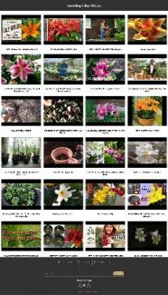 Growing Lilies Instant Mobile Video Site MRR Software