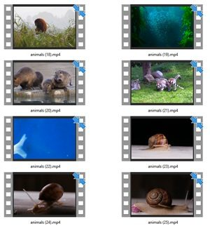 Animals Stock Videos Two V2 MRR Video