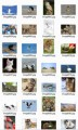 Animal Stock Images Resale Rights Graphic