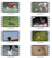 Animals Stock Videos One – V2 MRR Video